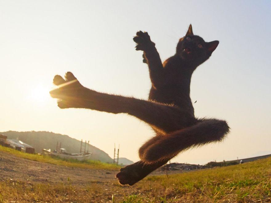ce-photographe-japonais-se-specialise-dans-la-photographie-de-chats-faisant-des-arts-martiaux-65587-full