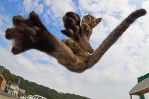 ce-photographe-japonais-se-specialise-dans-la-photographie-de-chats-faisant-des-arts-martiaux-65589-full