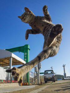 ce-photographe-japonais-se-specialise-dans-la-photographie-de-chats-faisant-des-arts-martiaux-65593-full
