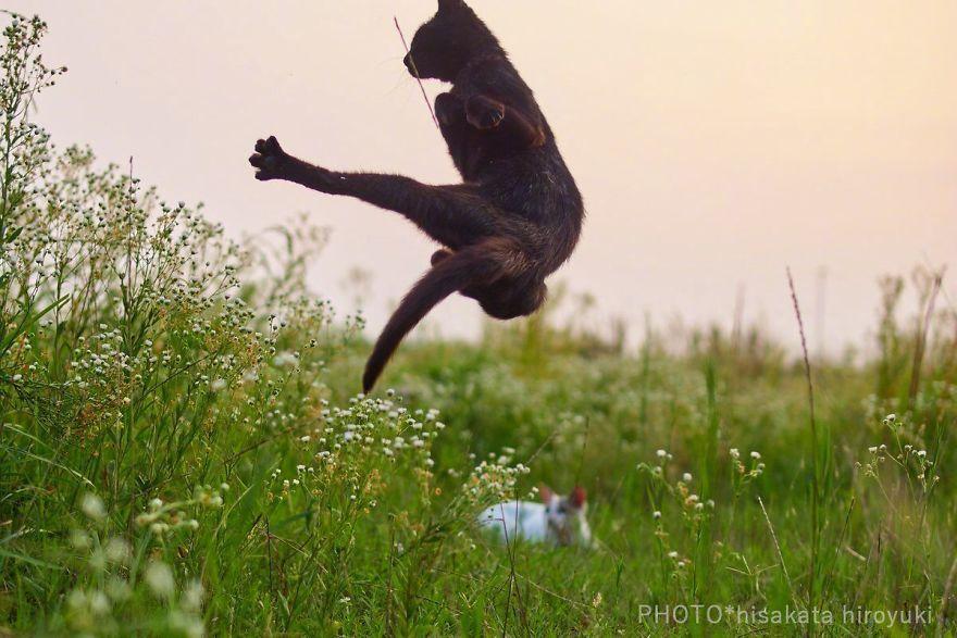ce-photographe-japonais-se-specialise-dans-la-photographie-de-chats-faisant-des-arts-martiaux-65595-full