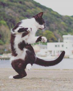 ce-photographe-japonais-se-specialise-dans-la-photographie-de-chats-faisant-des-arts-martiaux-65599-full